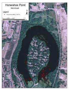 Horseshoe Pond Milfoil_100715